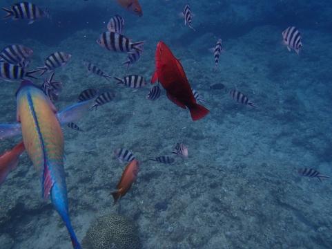 Under the sea -Cape Maeda